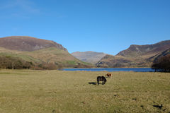 Nantlle valley. Stock Images