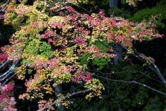 Nanzen Ji, Kyoto, Japón Fotografía de archivo libre de regalías