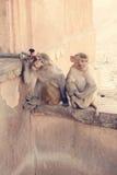 napój małpa wody target1831_0_ wodę Zdjęcia Stock