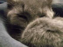 NAP γατών Στοκ φωτογραφία με δικαίωμα ελεύθερης χρήσης