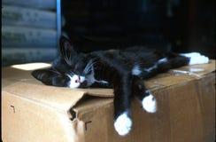 Nap time. Black kitten sleeping on box at feed store Royalty Free Stock Photos