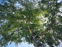 Nap under a tree royalty free stock photo