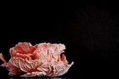 napa圆白菜新鲜的叶子喜欢在黑背景的一朵桃红色花与水滴  免版税库存图片