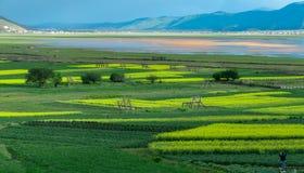 Napa湖在春天 免版税库存图片