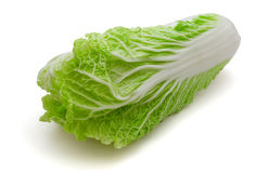 Napa cabbage Royalty Free Stock Image