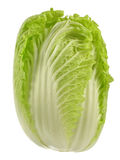 Napa Cabbage Royalty Free Stock Photo