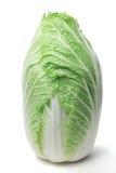 Napa cabbage. Fresh napa cabbage on white background stock photo