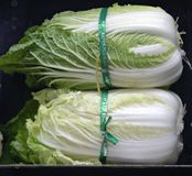 Napa Cabbage. Displayed in a grocery store in United States Stock Photo