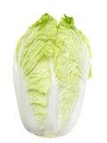 Napa Cabbage. Single fresh napa cabbage isolated on white royalty free stock image