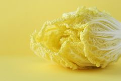 Napa Cabbage best view. Close up front view of a yellow napa cabbage. Yellow copy space stock photo