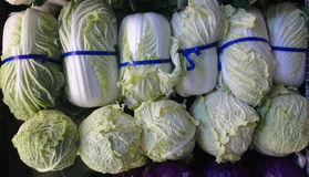 Napa cabbage, Celery cabbage Stock Photo
