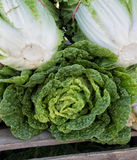 Napa Cabbage Stock Images