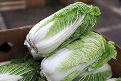 Napa cabbage on market. View of napa cabbage on the market stock images