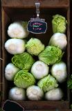 Napa Cabbage. On sale at the farmer`s market royalty free stock photo