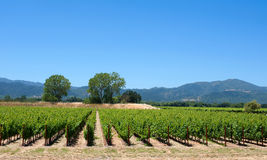 napa doliny winnica Obrazy Royalty Free