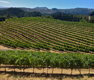 Napa Royalty Free Stock Photography