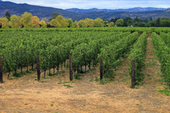 Napa`s vineyards on an overcast day. In California royalty free stock photo