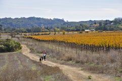 Napa Valley в осени стоковое изображение