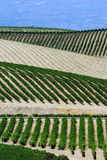 Napa Valley. Vinery on the hills of Napa Valley, northern California Stock Photography