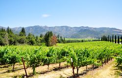 Napa Valley Photo libre de droits