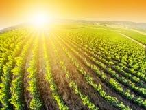Napa Valley au coucher du soleil photographie stock libre de droits
