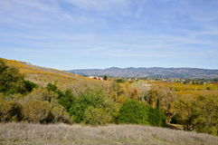 Napa Valley in Autumn. Napa Valley Grapevines in Autumn Stock Photos