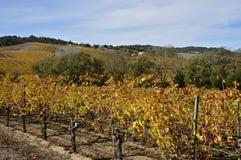 Napa Valley in autunno fotografia stock