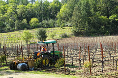 Worker cultivates soil in vineyard by tractor with disc narrows in Napa Valley, California Royalty Free Stock Image