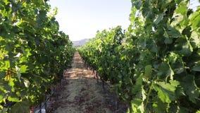 Napa Valley California almacen de video