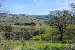 Napa Valley California Royalty Free Stock Image