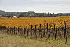 Napa Valley en otoño imagen de archivo libre de regalías