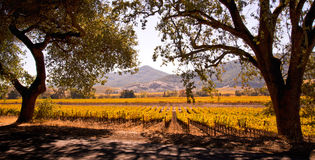 Napa Valley Kalifornien Autumn Vineyards arkivfoto