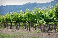 Napa Valley la Californie Photographie stock