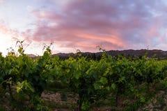 Napa Valley Royalty Free Stock Photo