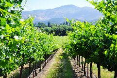 Napa Valley Royalty Free Stock Photos