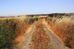 Napa Valley Salt Marsh Grass Stock Photo