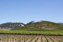 Napa Valley vineyard. Scenic view of a Napa Valley vineyard Stock Photography