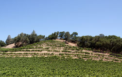Napa Valley vineyard. Scenic view of a Napa Valley vineyard Royalty Free Stock Photo