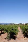 Napa Valley vineyard. Scenic view of a Napa Valley vineyard Stock Images