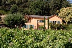 Napa Valley vineyard Stock Image