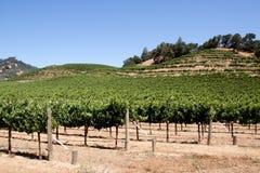 Napa Valley vineyard Royalty Free Stock Images