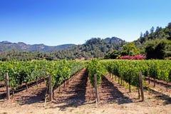 Napa Valley vineyard Stock Images