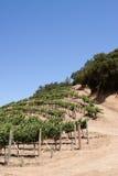 Napa Valley vineyard. Scenic view of a Napa Valley vineyard Stock Image