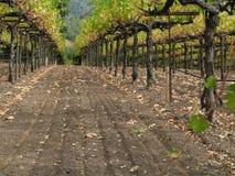 Napa Valley Vineyard Stock Photos
