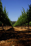 Napa Valley vineyard Royalty Free Stock Images