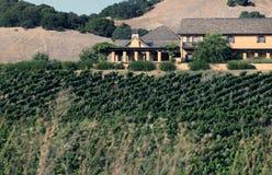 Napa valley vineyard, California. USA Stock Photos