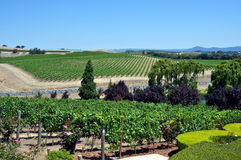 Napa Valley vineyard, California Royalty Free Stock Photography