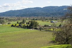 Napa Valley vineyard in Spring. Overlooking a vineyard the Napa Valley California Stock Photography