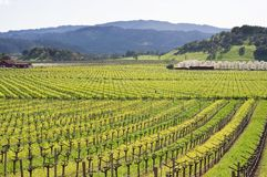 Napa Valley vineyard in Spring Royalty Free Stock Photo