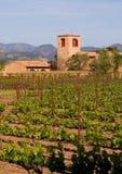 Napa Valley vineyard at sunset stock photo